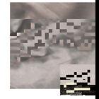 "- Moments in Shapeshifting Belarisk Vinyl 12"" Album"
