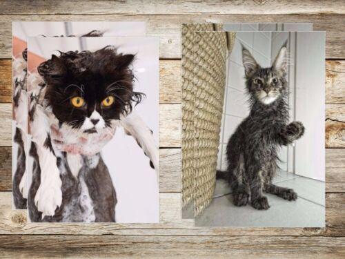 20-er Tierpostkarten-Set Ansichtskarten LUSTIGE Katzen 10 Motive á 2 St.