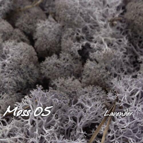 Natural Norwegian Reindeer Moss préservé séché Craft fleur étamine Décoration