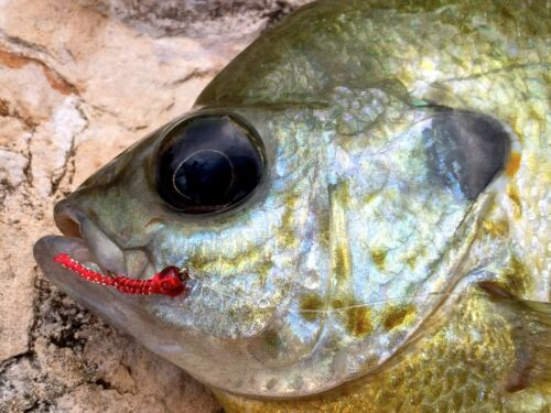 6 flies Red Hot Worm Fly Fishing Flies Bass, Bream, Catfish, Perch, Trout