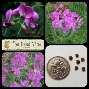 Swainsona galegifolia 20 SMOOTH DARLING PEA SEEDS Native Annual Purple Flower
