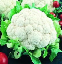 250 Graines de Choux Fleur Boule de Neige Potager Légumes