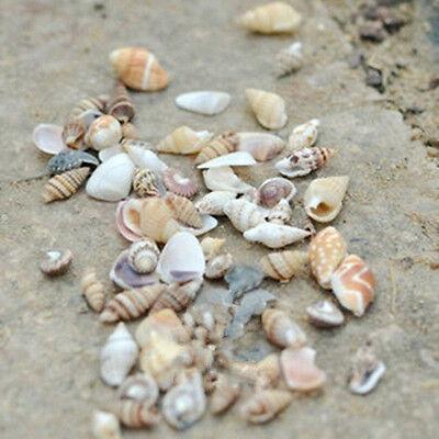 1 bag DIY Mixed Sea Shells Shell Craft Aquarium Nautical Decor Ornaments