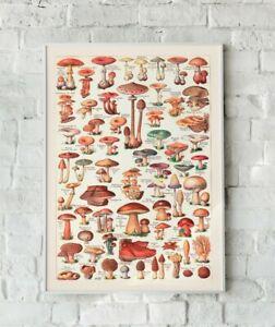 Impresion-de-hongos-setas-Obra-De-Arte-Vintage-Vintage-Hongo-Seta-de-pared-Arte