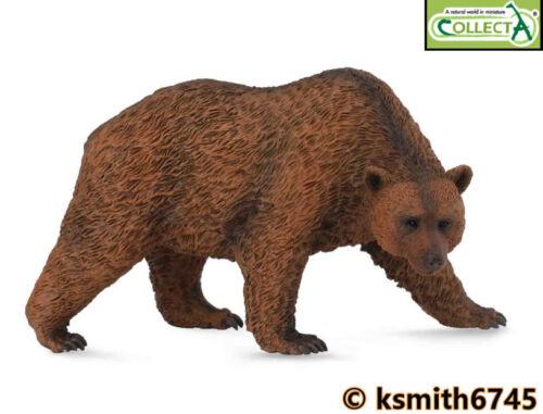 NUOVO CollectA Orso Bruno in Plastica Solida giocattolo Wild Zoo Woodland Animali Predator