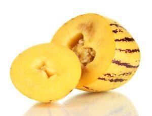 Solanum-muricatum-20-Samen-Pepito-Birnenmelone