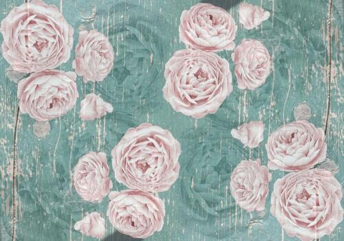 VLIES   Fototapete XXL Rose Blumen Tapete Vliestapete 15F0398400