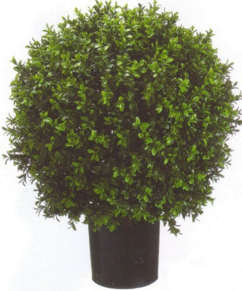 Artificial 24 outdoor uv boxwood topiary tree 2 39 bush for Outside plants and shrubs