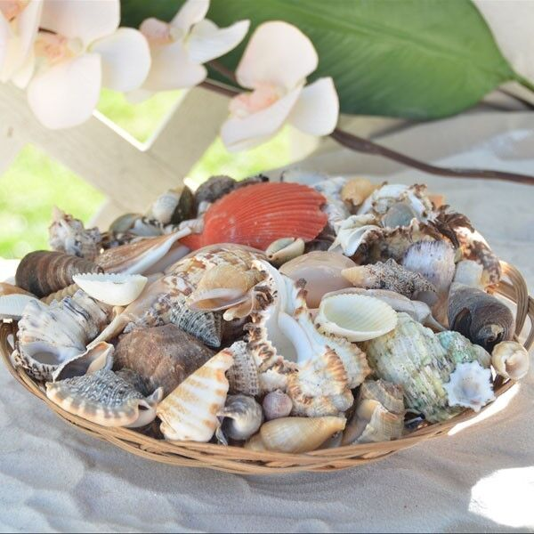 Sea shells natural shells beach luau party home decor 10 for Shells decorations home