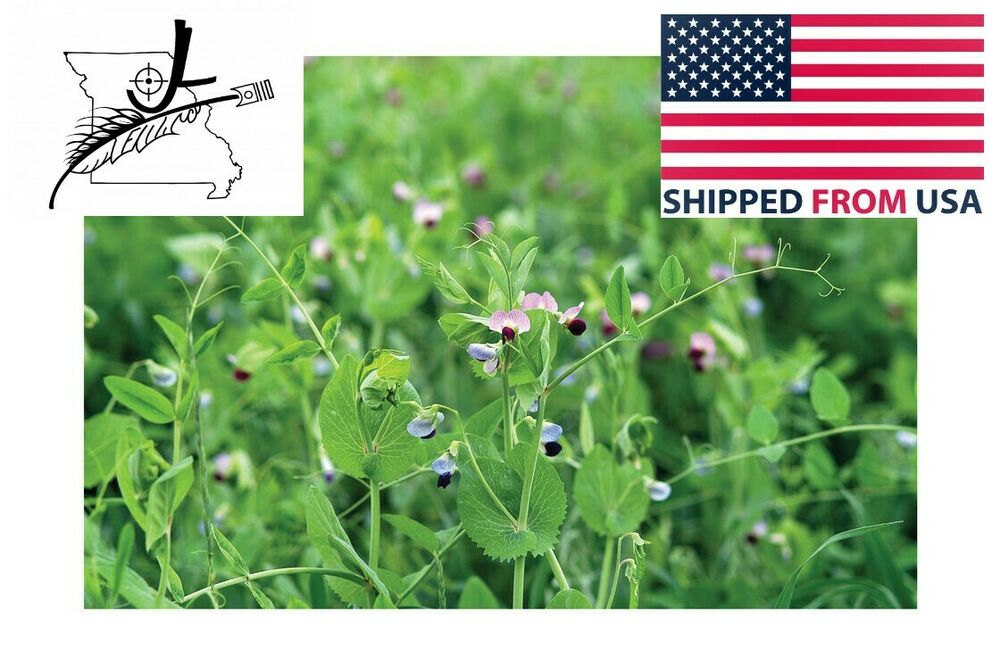 Austrian winter pea 1 lb seeds peas open pollinated cover crop forage