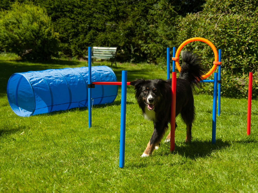 dog agility set von procyon hundesport h rde tunnel. Black Bedroom Furniture Sets. Home Design Ideas