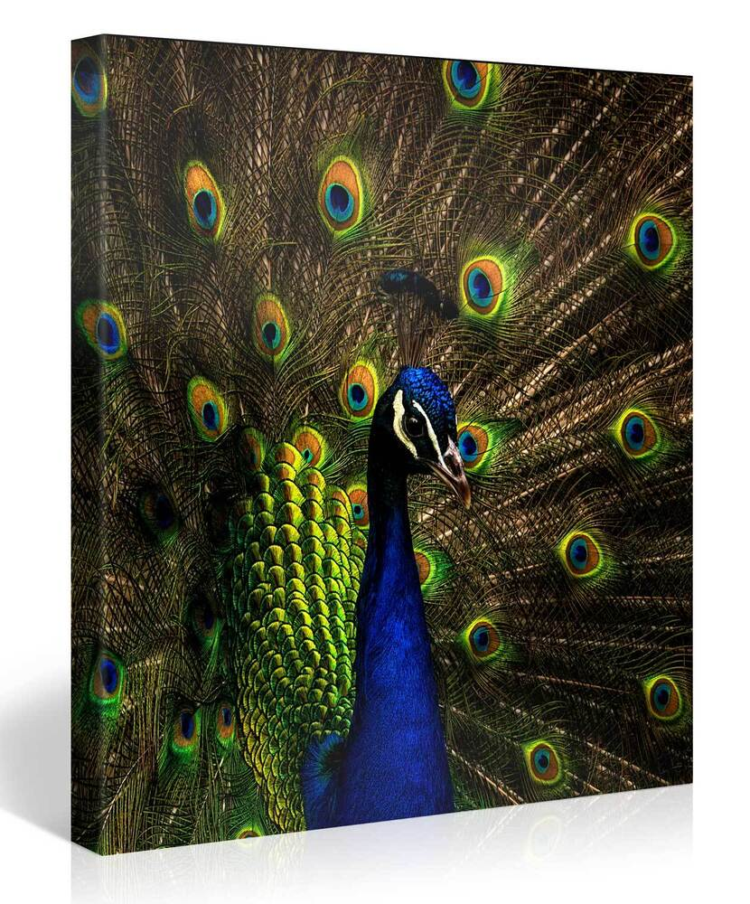 Stretched canvas print colorful peacock large animal for Large colorful wall art