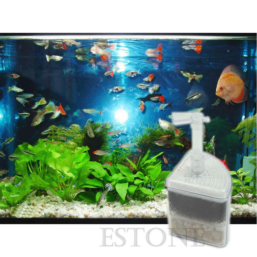 Biochemical air driven corner sponge filter fry shrimp for Shrimp fish tank