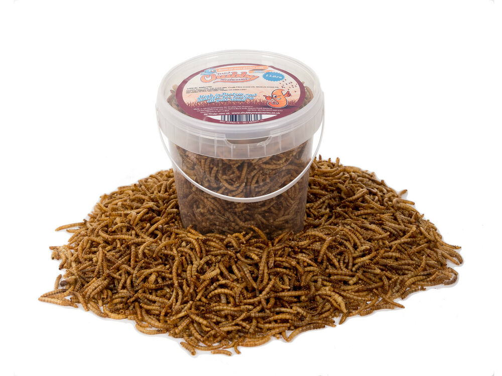 1 litre high quality chubby dried mealworms in a tub for Mealworms for fishing