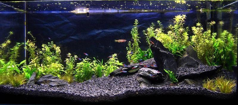 Natural black basalt gravel substrate for aquarium fish for Natural fish tank