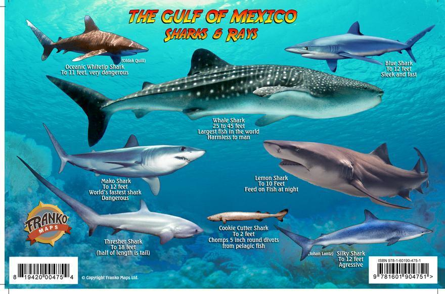 Gulf of mexico sharks rays guide franko maps laminated for Types of fish in the gulf of mexico