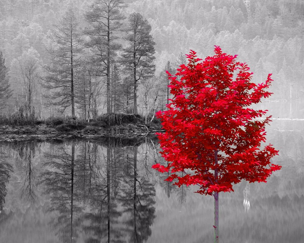 Red Gray Black Home Decor Wall Art Photo Print Tree
