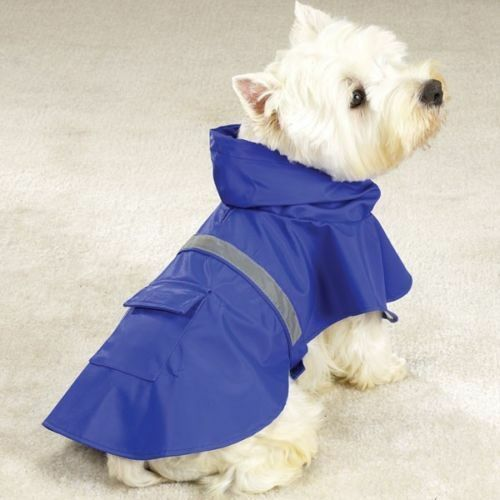 dog in rain gear