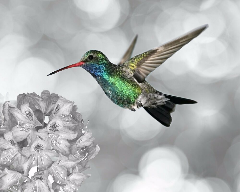 Hummingbird photo art print wall decor bedroom or kitchen for Hummingbird decor
