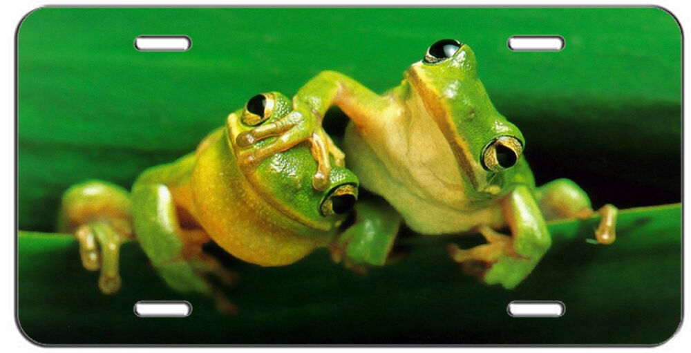 Custom License Plate Tree Frog Love Auto Tag Ebay