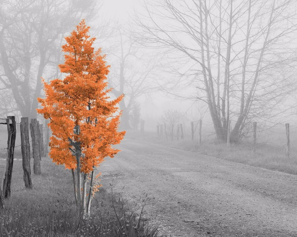 Orange Gray Home Decor Wall Art Photo Print Foggy Tree B Amp W
