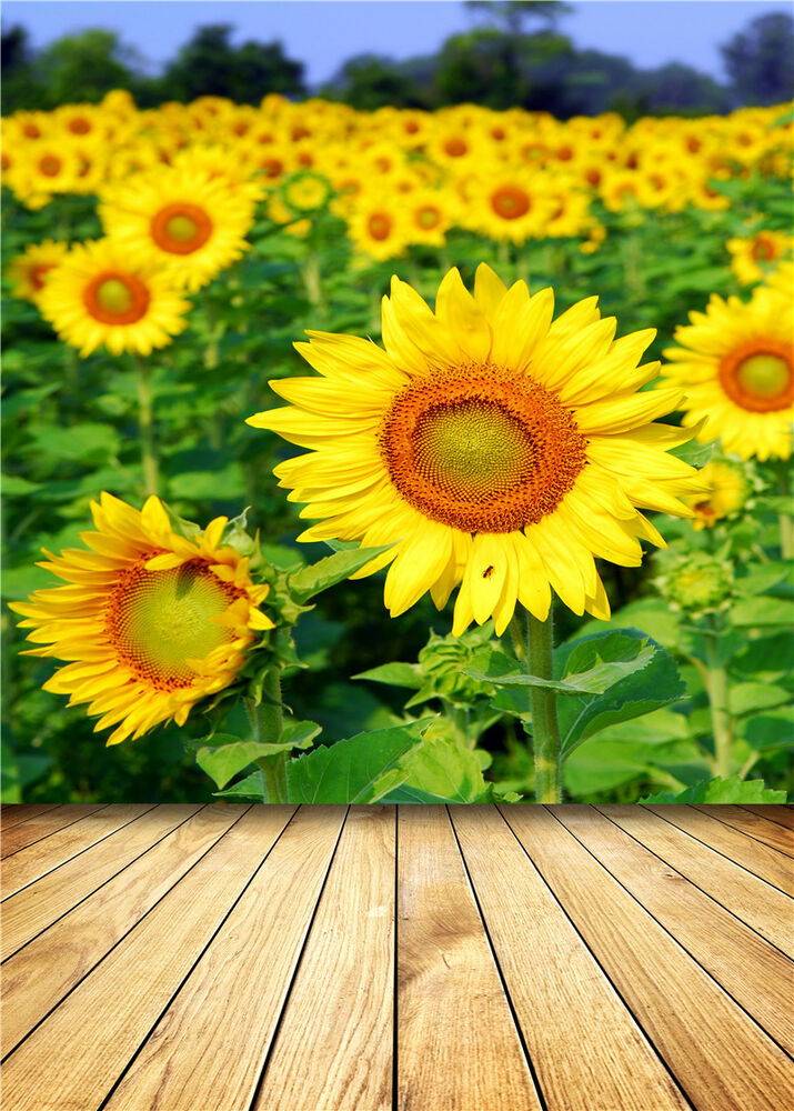 Sunflower Photography Backdrops Photo Props Wooden Floor