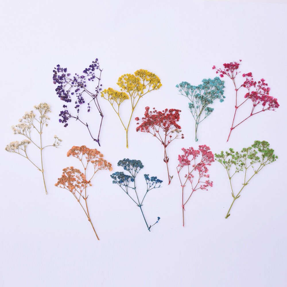 1pack Natural Dried Flowers Baby S Breath Craft Diy