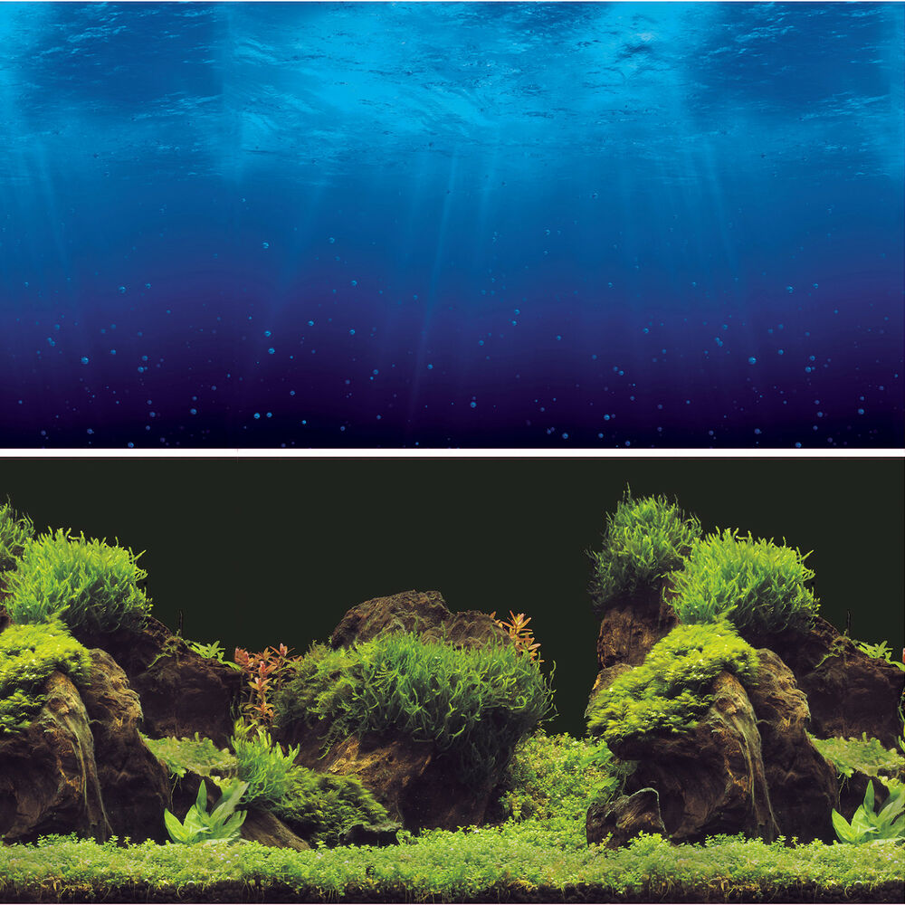 It's just a graphic of Critical Aquarium Backgrounds Printable
