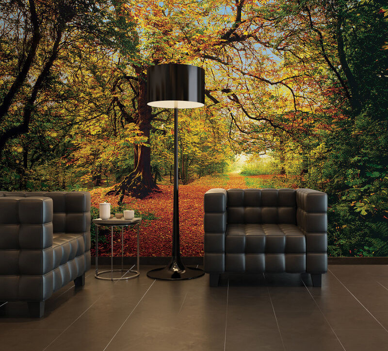 Giant wall mural photo wallpaper autumn forest leafy woods for Home wallpaper ebay