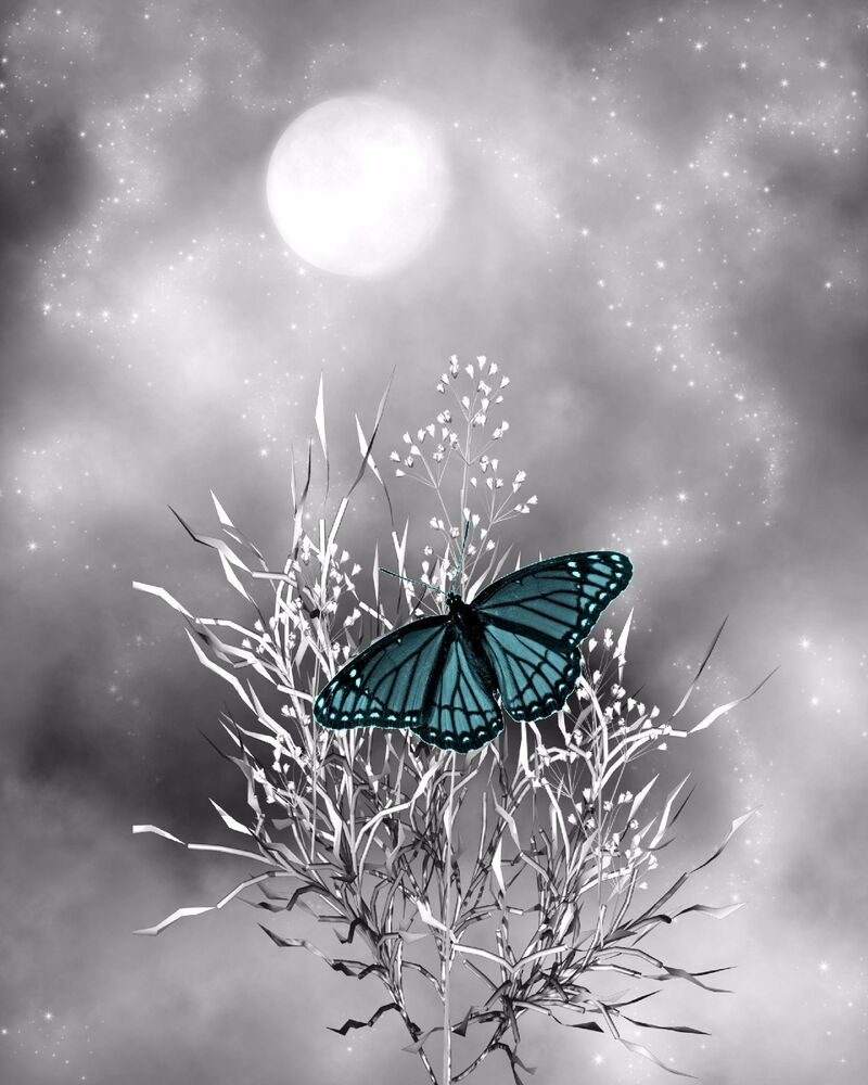 Teal Gray Home Decor Butterfly Decorative Wall Art Photo