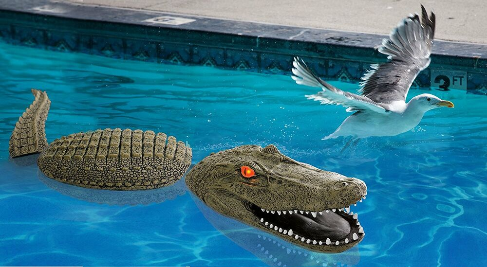 Floating alligator gator decoy birds goose duck koi pond for Pool with koi pond