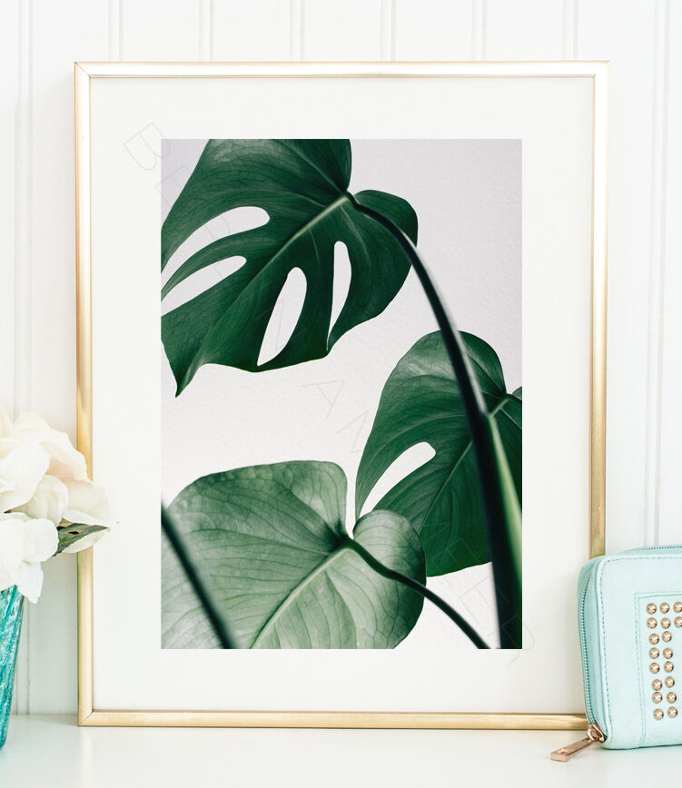 monstera kunstdruck poster blatt pflanze tropisch bild fotografie ebay. Black Bedroom Furniture Sets. Home Design Ideas