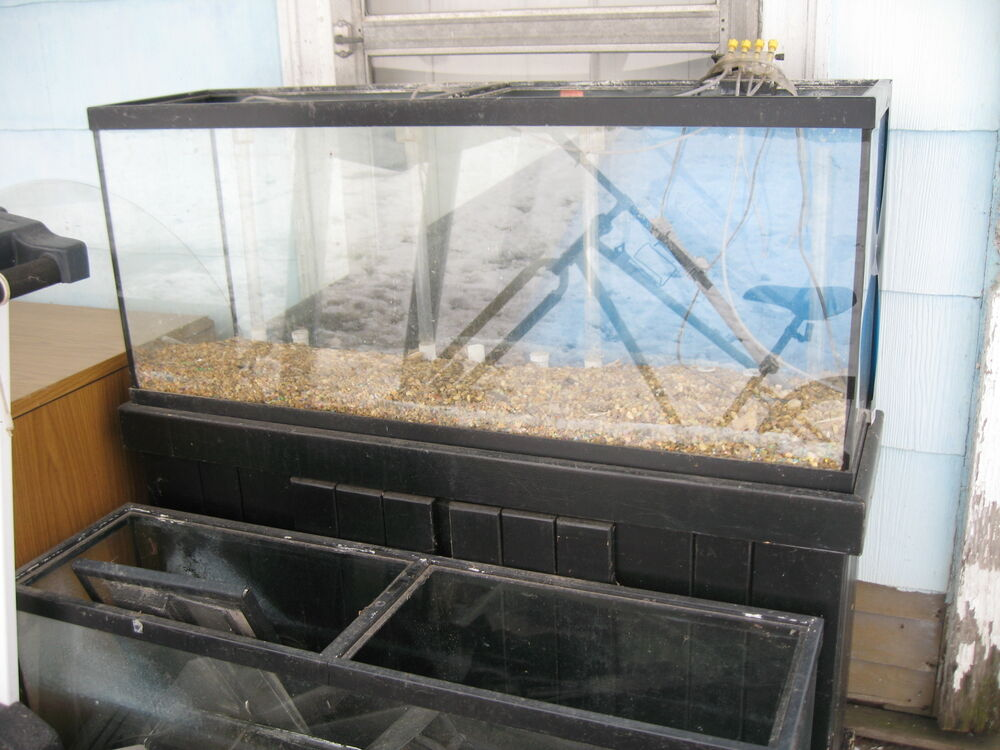 62 off 55 gallon glass aquarium small pet reptile for 50 gallon fish tank dimensions