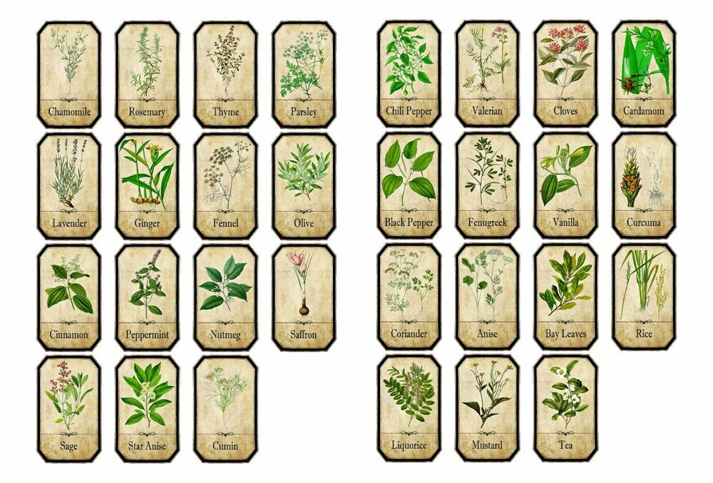 Set Of Vintage Style Apothecary Spice Herb Labels Sticky