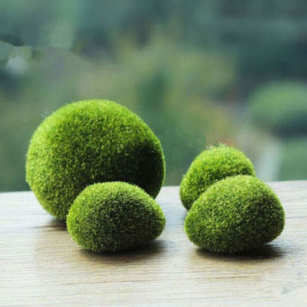 marimo moss b lle k nstliche gras steine rasen mini fairy garden terrarium ebay. Black Bedroom Furniture Sets. Home Design Ideas
