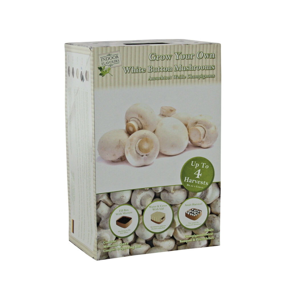Mushroom White Button Home Grow Kit Small Space Grow Your Own ideal for a  Gift | eBay