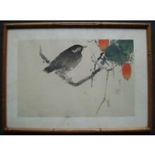 WANTANABE SHOTEI JAPANESE WOODBLOCK PRINT STARLING AND SNAKE GOURD RARE & NICE