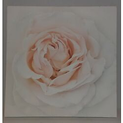 NEW!! Pink Rose Canvas Painting 16'' X 16'' Distributed by Portfolio Arts Group