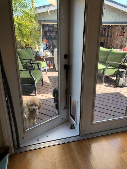 Pet Door For French Doors In Or Out Pet Products Extra