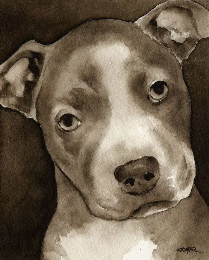 summary on pit bulls And some of the critiques of the report are downright silly in their shotgun attempts to muddy the waters and disqualify the bulk of the statistics by critiquing the inclusion of some of the rarer.