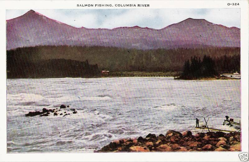 Postcard oregon salmon fishing columbia river near mint for Columbia river salmon fishing