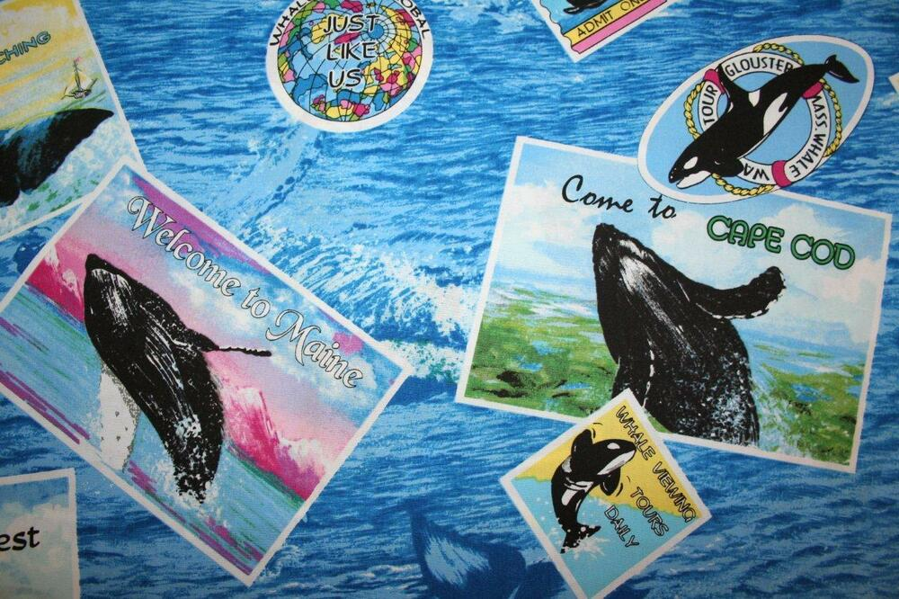 Whale watching whale tourist travel patches on ocean for Children of the sea fabric