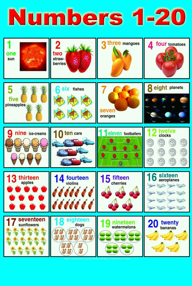 Educational Wall Charts | eBay
