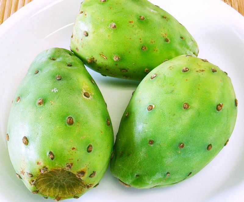 how to grow prickly pear cactus from seed