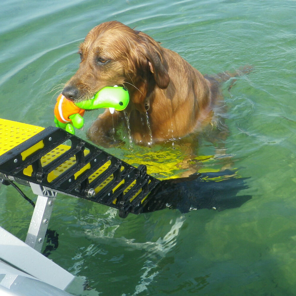 Wag dog boarding steps for recreational boats vs ladders for What is dog boarding