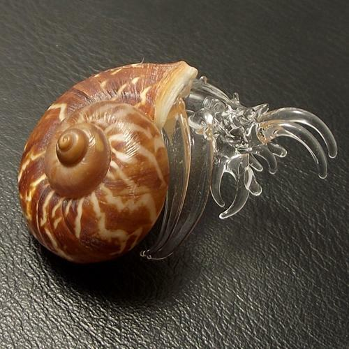 CUTE!!! GLASS BLOWING HERMIT CRAB NATURAL SEASHELL : LAND ...