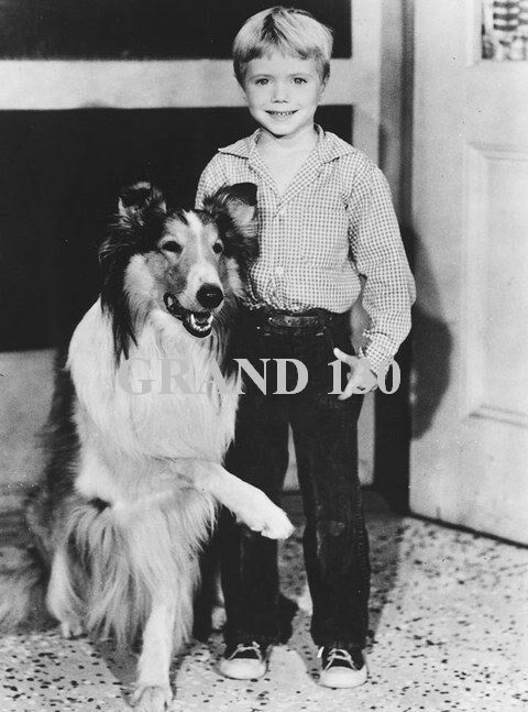 Celebrity Pictures - Timmy Martin and Lassie - Jon Provost ...