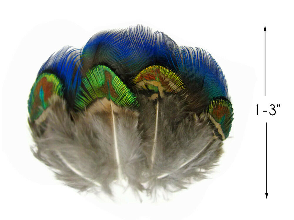 Peacock Feathers 2 Dozen Iridescent Blue and Green/Gold ...