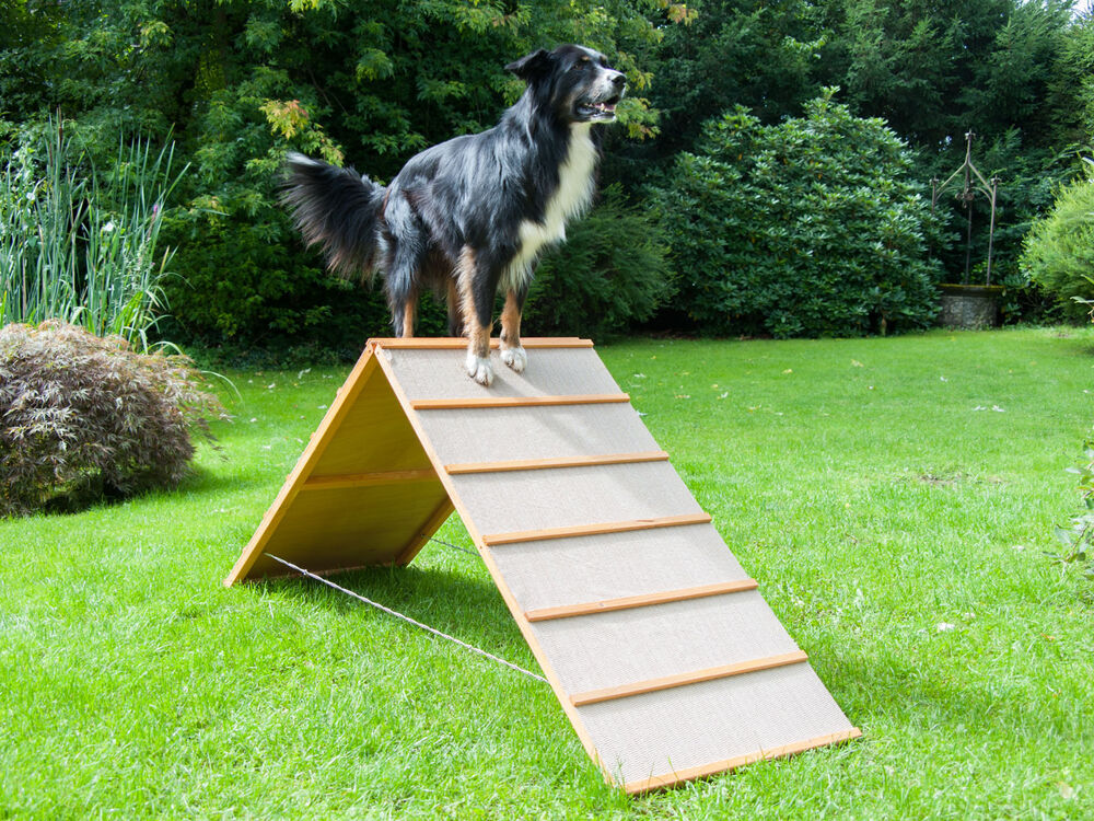 dog agility a wand antirutsch belag hundesport. Black Bedroom Furniture Sets. Home Design Ideas
