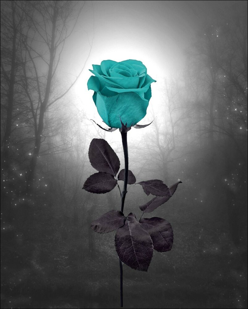 Teal Rose Landscape Wall Decor Photo Art Surreal